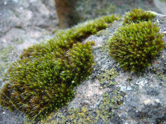 700_rock-cap-moss-patch