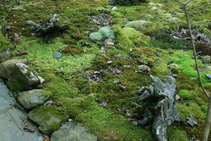 700_shade-mosses-collection