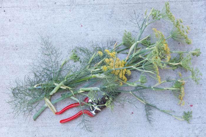 felco-pruners-fennel-gardenista