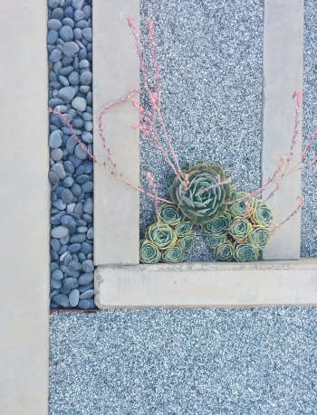 Form, line and succulents by Arterra