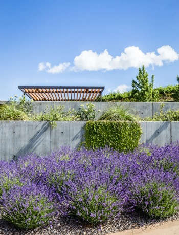 A restrained material and planting palette, with lavender and concrete