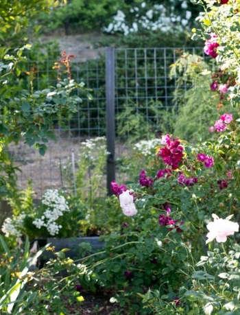 Healdsburg CA garden