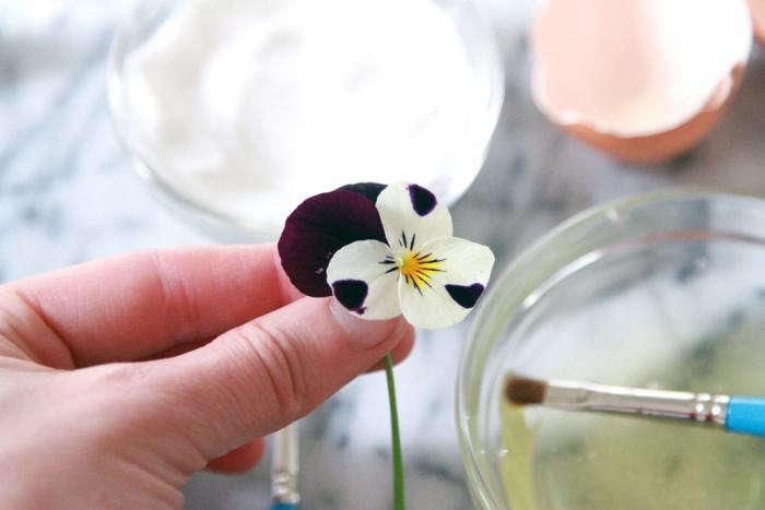 viola-pansy-egg-white-gardenista