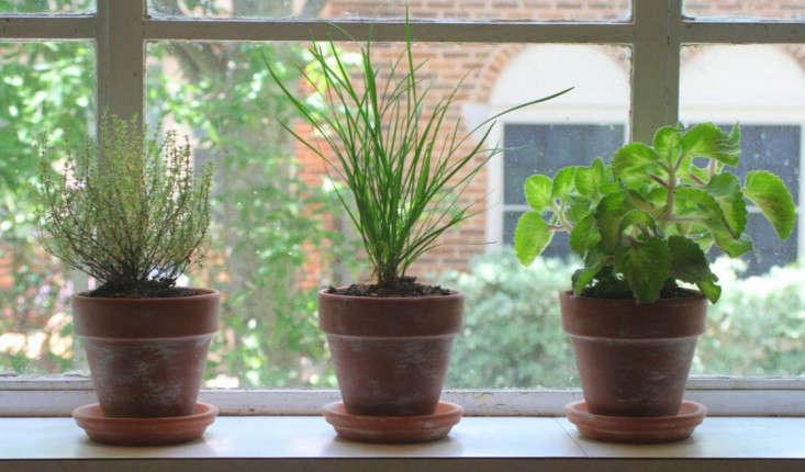windowsill-aged-terra-cotta-pots-gardenista