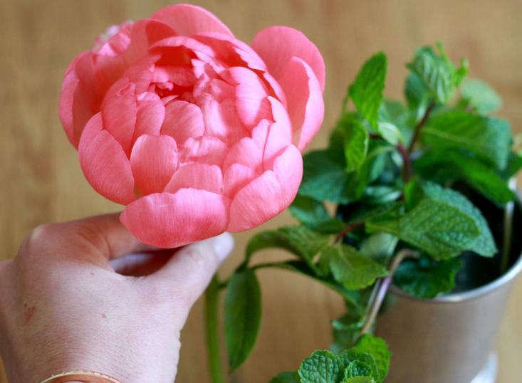 last-minute-mothers-day-peony-peonies-flowers-gardenista