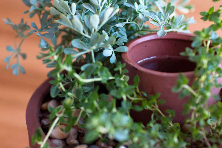 joey-roth-self-watering-planter-closeup-gardenista