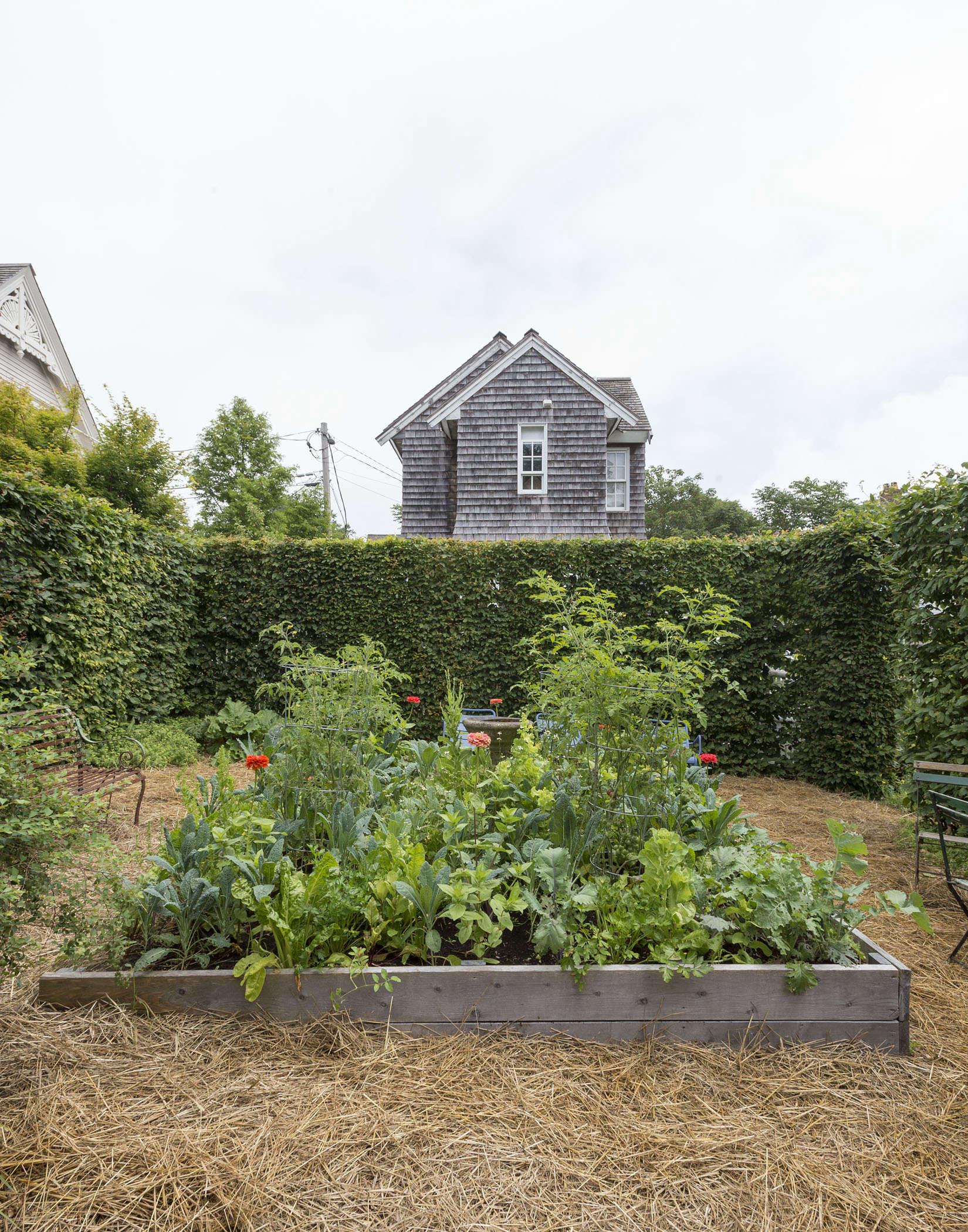 Los mejores árboles, viñas y arbustos para plantar para las aves: una lista de inicio | Todo sobre las aves