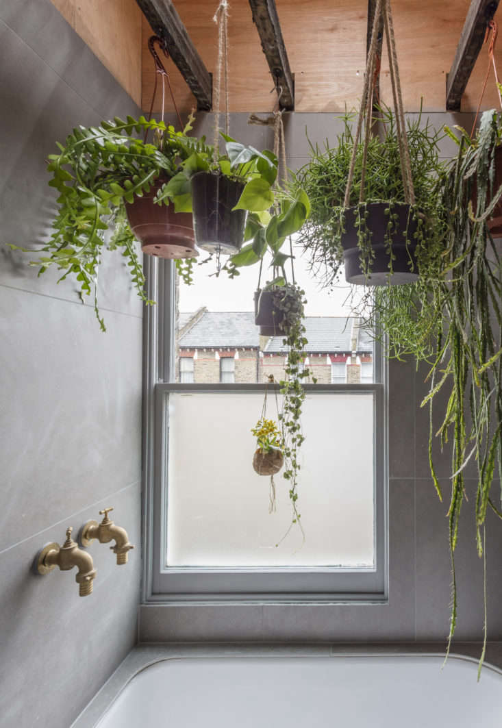 Sky S The Limit 5 Indoor Plants For Rooms With High Ceilings Gardenista