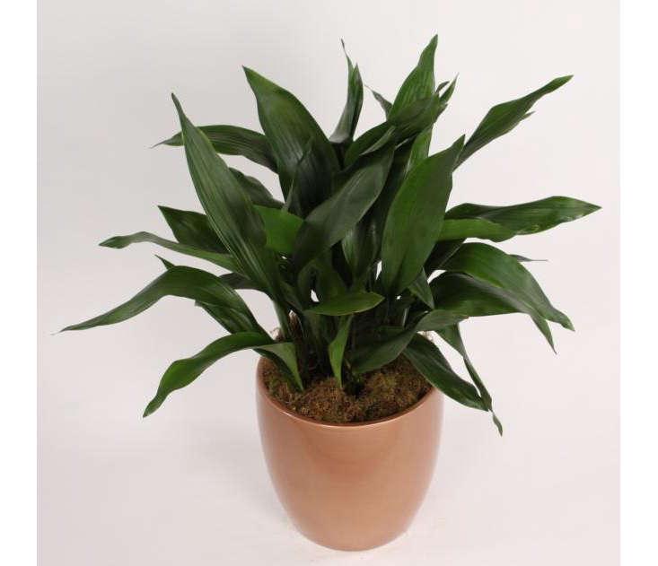 Expert Advice: 10 Best Low-Maintenance Houseplants - Gardenista