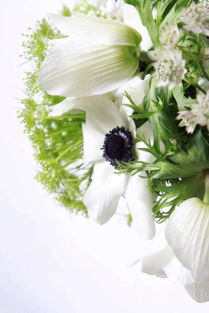 700_anemone4392
