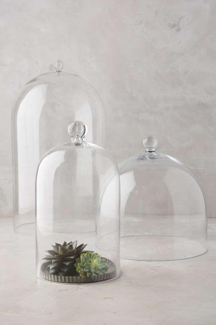 glass-cloche-bell-jar-terrarium-anthropologie-gardenista