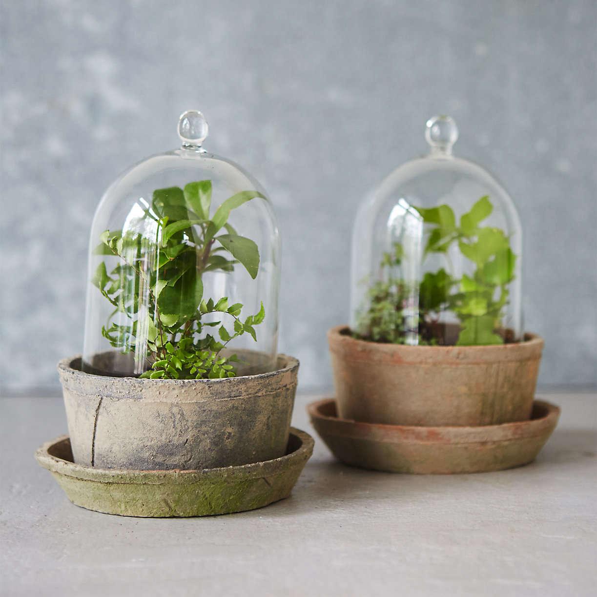 10 easy pieces glass cloche terrariums gardenista. Black Bedroom Furniture Sets. Home Design Ideas