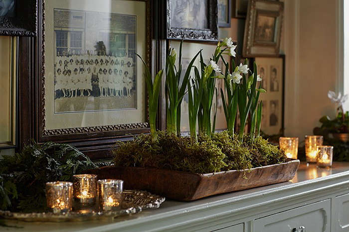 woodland-holiday-party-Michelle-house-paperwhites-Gardenista