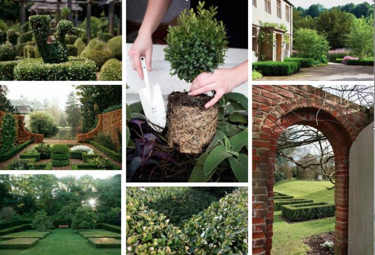 boxwood-field-guide-collage-gardenista
