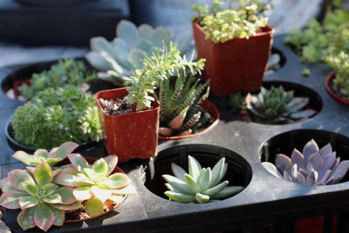 diy-black-planters-9-gardenista