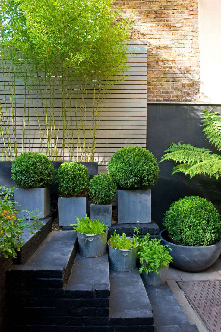 designer visit: the black and green garden of chris moss - gardenista
