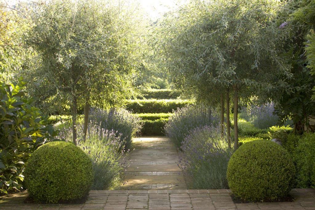 peter-fudge-garden-lavener-boxwood-olive-trees-gardenista