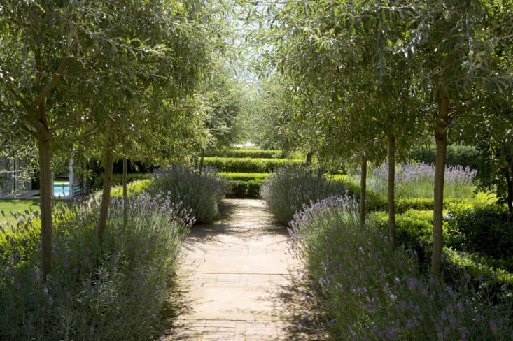 peter-fudge-lavender-path-olive-trees-hedges-gardenista-