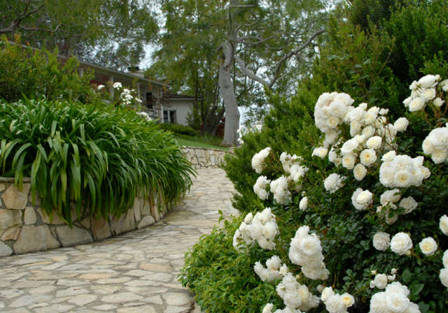 Hollywood Hills: Entry WalkLined with white roses, jasmine, and Lily of the Nile, a flagstone walk greets visitors. The stone pathway opens to impressive valley views. Photo: Russ Cletta