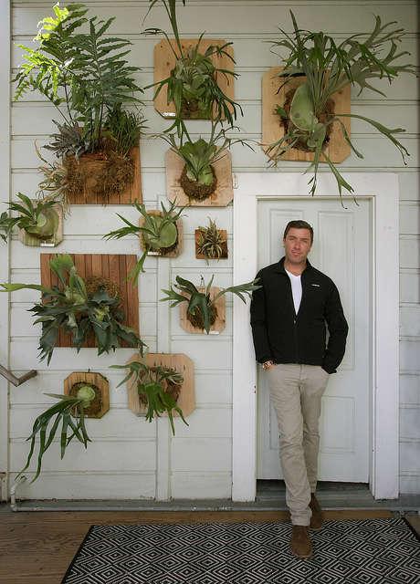 Staghorn fern garden: Designer Daniel Nolan seen with his home vertical garden composed of staghorn ferns. Photo: Caitlin Atkinson