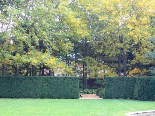Midwestern Estate: Yew Hedges and Locust Trees in the fall.: Allée of locust trees in autumn contrasted to the rich green of hedges. In the winter the yew offer contrast to the architecture of the trees. The estate is designed at the highest level of universal accessibility, providing an experience of nature for those with limited mobility. Photo: © Deborah Nevins