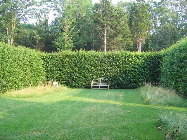 Long Island: Hornbeam Hedges.: Formal, clipped hornbeam hedges provide contrast to the woods beyond, intensifying the tension between built and unbuilt, and creating a sense of refuge in the enclosed space. Photo: © Deborah Nevins