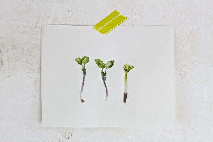 3-sprouts1