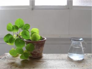 Pileas by Mieke Verbijlen | Gardenista