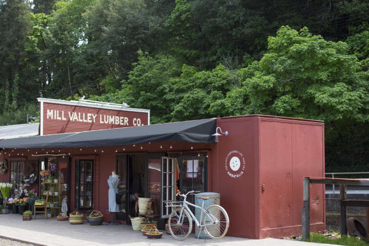 Q Amp A With Molly De Vries Mill Valley S Queen Of Green