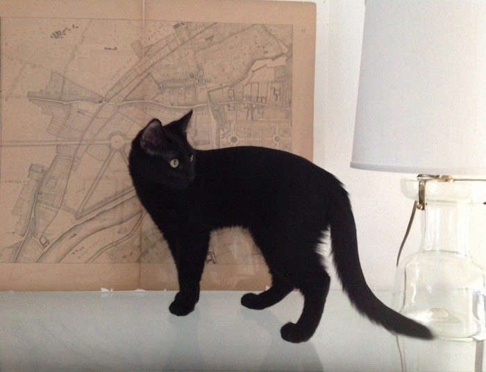 Cat-Gift-Silvia-Remodelista