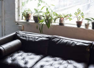 David Ling Architect, Live/Work sudio in New York, black leather Knoll Mies van der Rohe sofa in front of plants on window sill | Remodelista