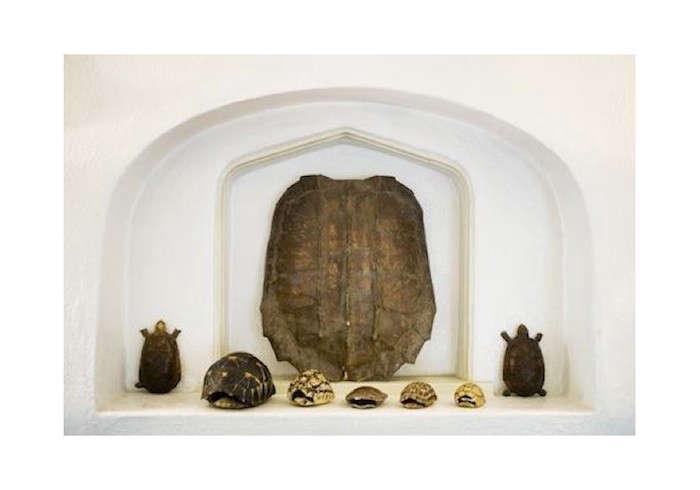 Eric-Goode-Tortoise-Shells-Mantel