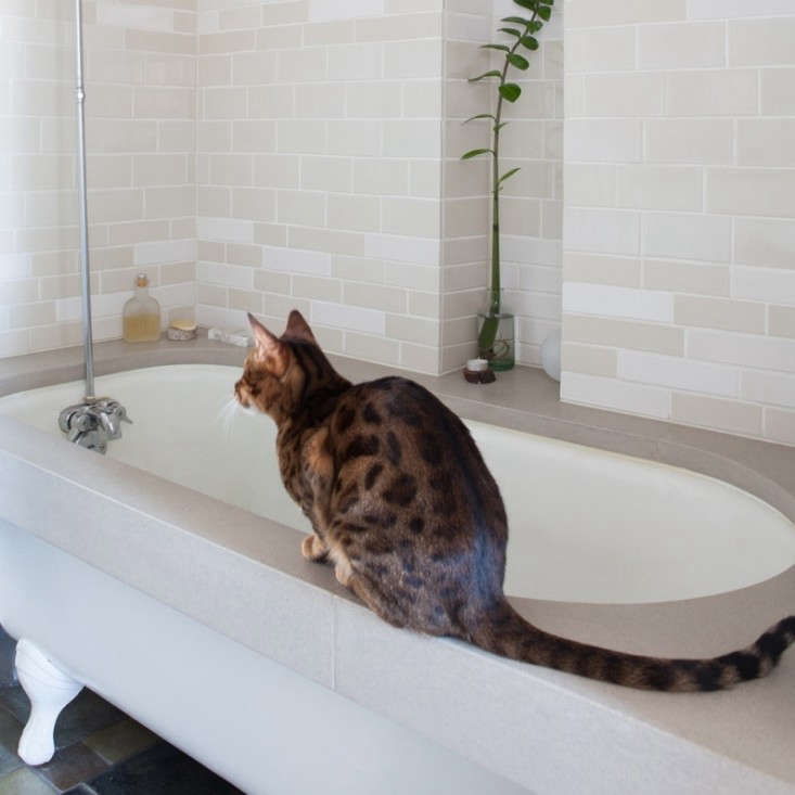 Ian-Read-Medium-Plenty-Guest-Bath-Heath-Tiles-Remodelista-02