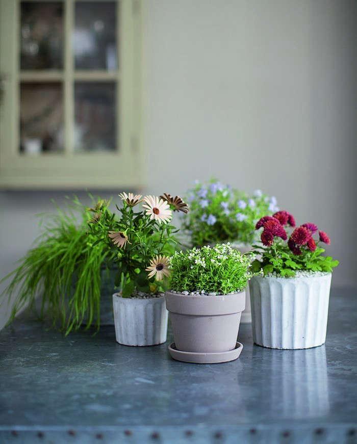 Isabelle-Palmer-The-House-Gardener-Gardenista-04