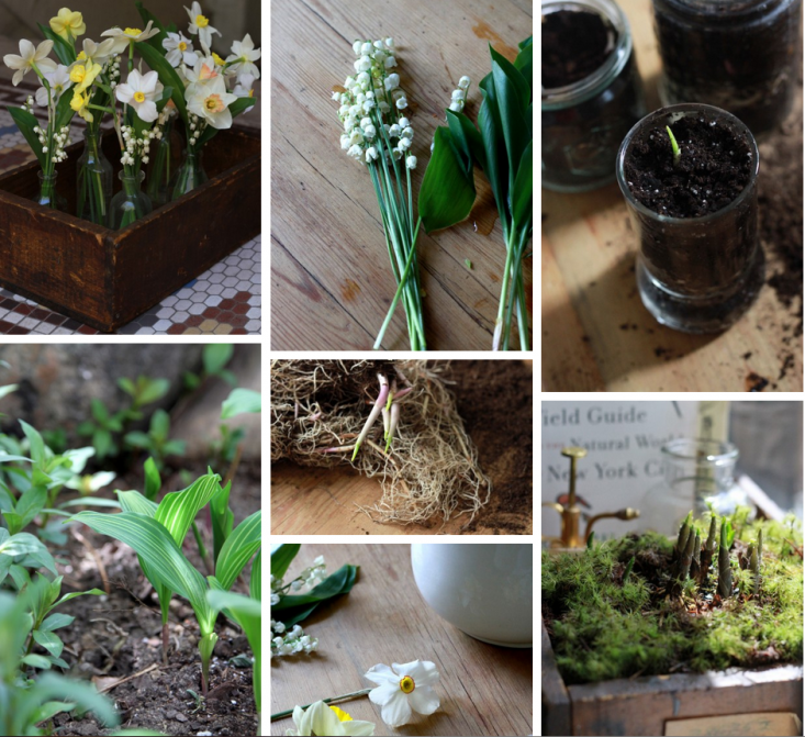 Lily-of-the-Valley-field-guide-collage-gardenista