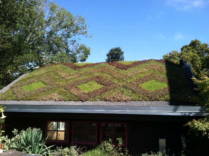 Studio Geiger 10 Modern House with Green Living Roof