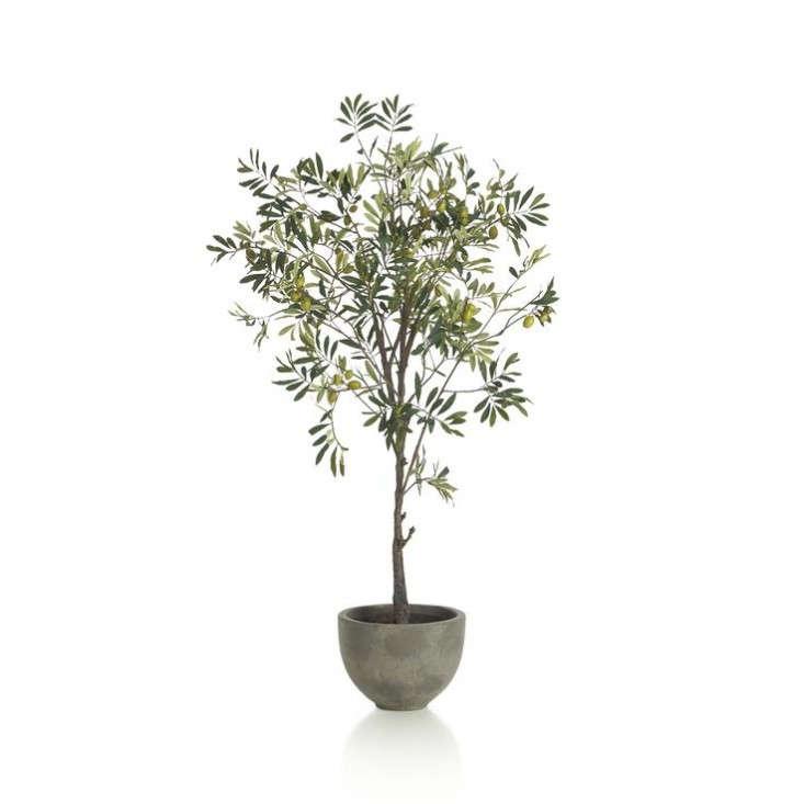 crate-barrel-olive-tree-remodelista
