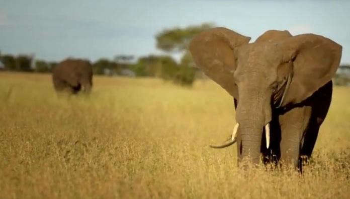 elephant-safari-1
