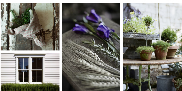 field-guide-rosemary-collage-gardenista
