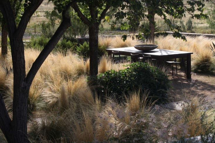 gravel-gathering-space-trees-low-water-grasses-christine-ten-eyck-gardenista