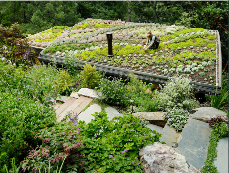 green-roof-feldman-architecture-mill-valley-gardenista