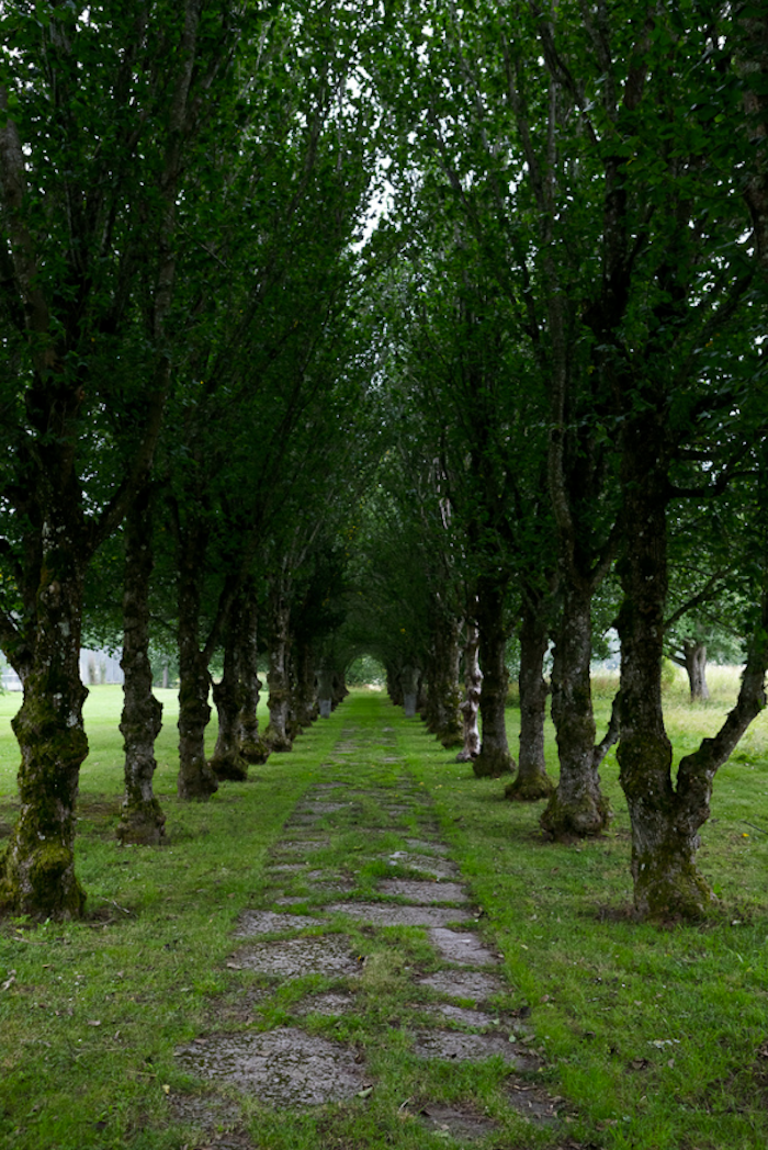 haringes-lott-path-of-trees-Gardenista