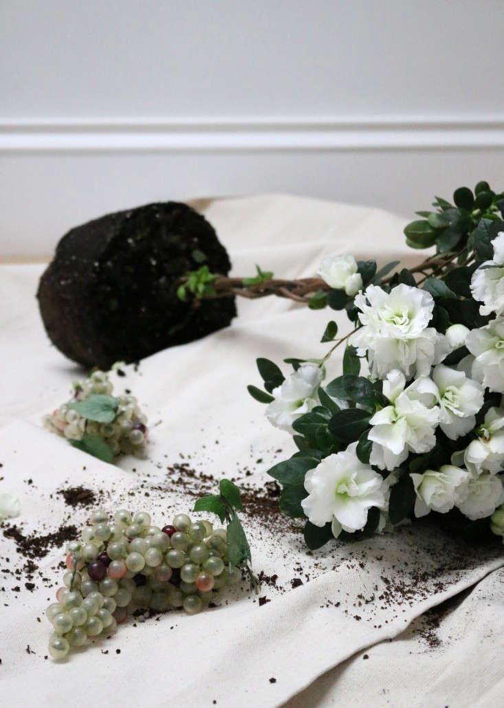 houseplants-history-8-erin-boyle-gardenista