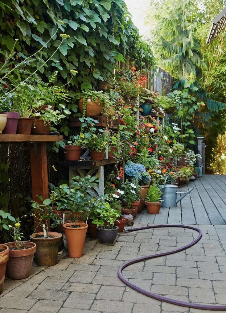 linda-tom-kubik-plant-shelves-gardenista