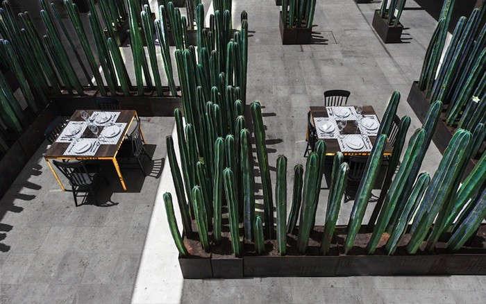 montero-terrace-cactus-screen