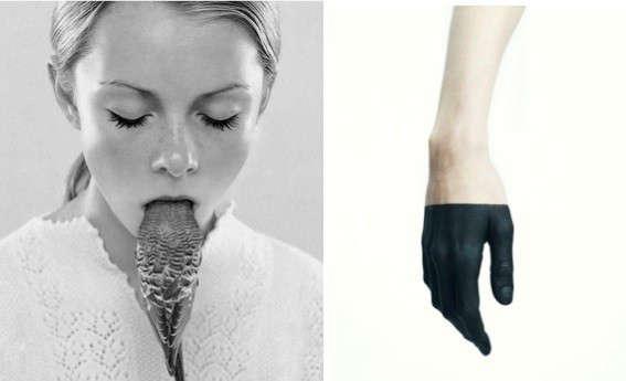 parakeet-hand-remodelista