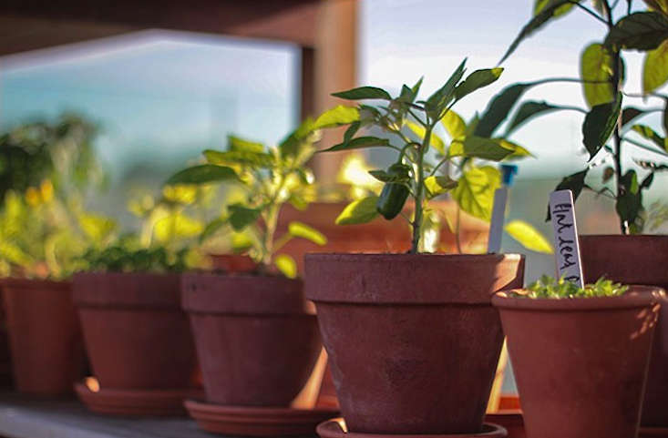 potted-herbs-remodelista-shoreditch