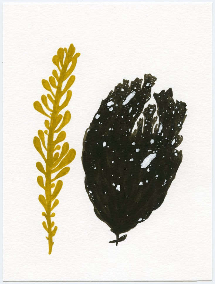 seweed painting by Kate Pugsley