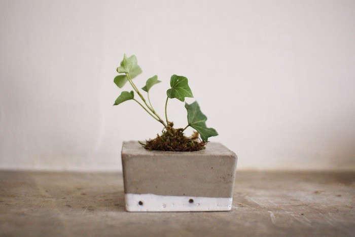 tasi-masi-concrete-square-planter-gardenista