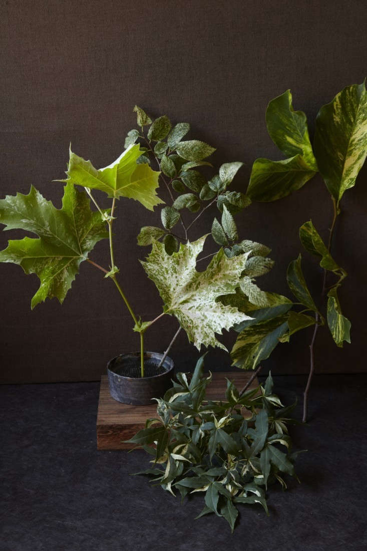 variegated-plants-1-maria-robledo-gardenista